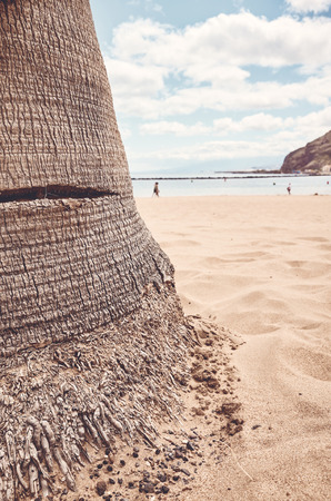 Palm tree trunk on a beach, selective focus, color toned picture, Tenerife, Spain. 版權商用圖片