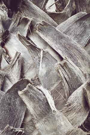 Close up picture of a palm tree trunk, color toned natural background or texture, selective focus. Imagens