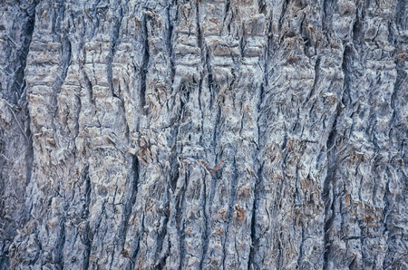 Close up picture of a palm tree trunk, natural abstract background or texture, color toning applied, selective focus.