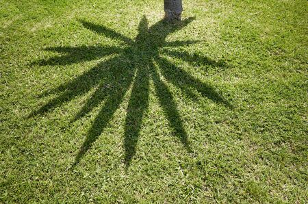 Palm tree shadow on grass, abstract natural background. Stockfoto