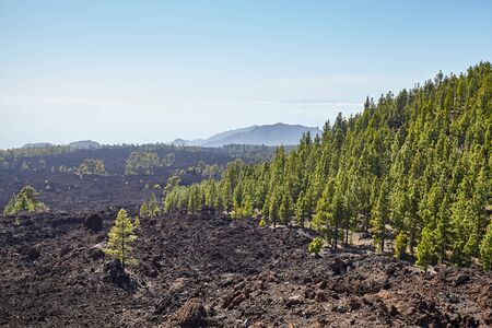 Volcanic landscape of Teide National Park, Tenerife, Spain.