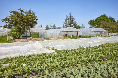 Organic vegetable farm with greenhouses in distance.