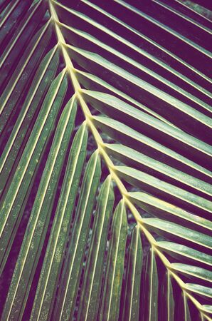 Close up of a palm tree leaf, color toned picture, selective focus. Stock Photo