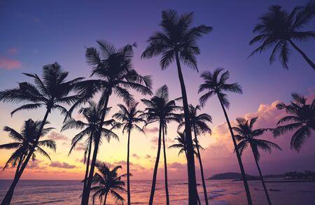 Sagome di palme da cocco al tramonto viola, Sri Lanka.