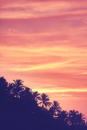 Sky with palm trees silhouettes at sunrise, color toning applied.