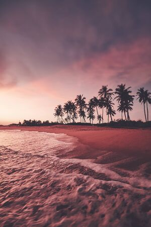 Tropical beach with coconut palm tree silhouette at sunset, color toning applied, selective focus, Sri Lanka.