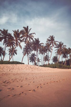Retro toned picture of coconut palm trees by a beach. Stock Photo