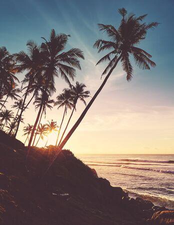 Coconut palm trees silhouettes at sunrise, color toning applied, Sri Lanka.