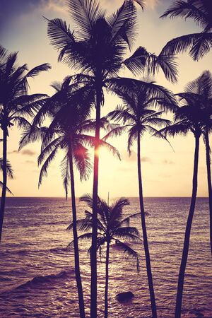 Coconut palm trees silhouettes at sunset, color toning applied, Sri Lanka. Stock Photo