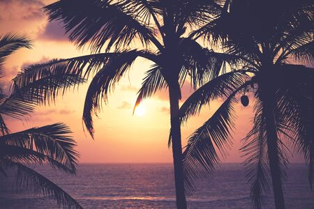 Coconut palm trees silhouettes at sunset, color toning applied, tropical vacation concept.