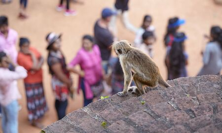 Monkey watches tourists waiting in line to climb the Sigiriya rock, selective focus.