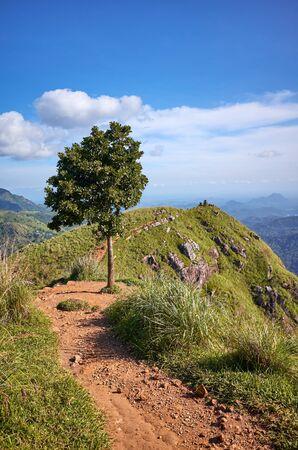 Tree at the Little Adams Peak on a sunny day, Sri Lanka. Stock Photo