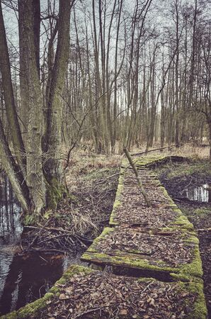 Old broken wooden bridge in a freshwater swamp forest, color toning applied.