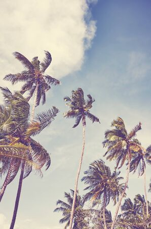 Coconut palm trees against the sky, color toned picture.
