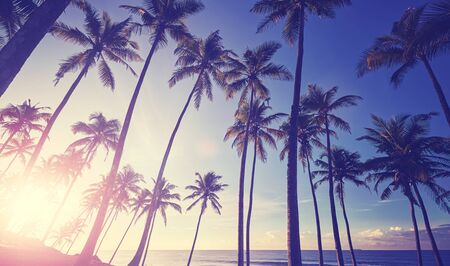 Tropical beach with coconut palm trees silhouettes at sunset, color toning applied. Banco de Imagens