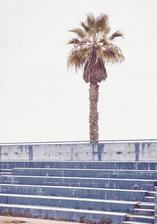 Palm tree over empty concrete stadium seats, color toning applied.