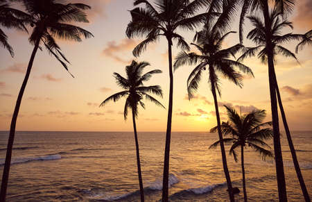 Beautiful tropical sunset with coconut palm trees silhouettes.