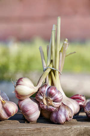 Close up picture of organic garlic on a wooden table, selective focus.
