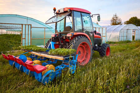 Manual seedling planter mounted to a tractor in front of greenhouses at sunset.