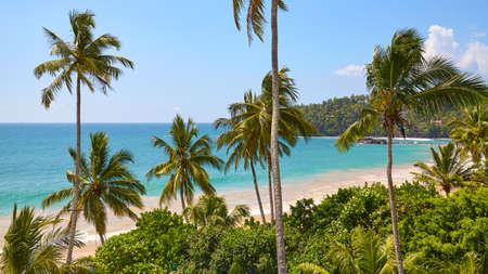 Tropical beach with coconut palm trees on a sunny summer day.