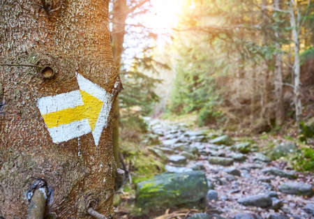 Hiking trail marker on a tree in mountain forest, selective focus, Karkonosze National Park, Poland. Stock Photo