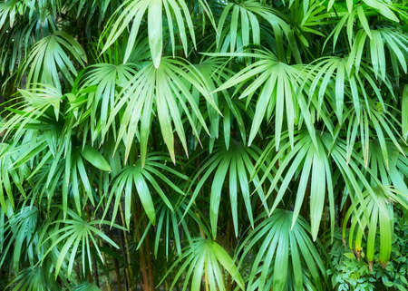 Picture of green leaves, nature background.