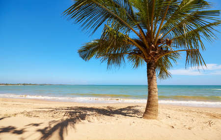 Coconut palm tree on an empty tropical beach, Sri Lanka. Banque d'images
