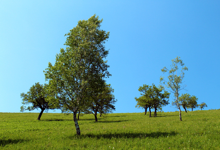 Isolated trees on a mountain slope against blue sky 版權商用圖片 - 96570188