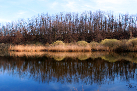 Bare trees reflecting in a pond in spring Stockfoto