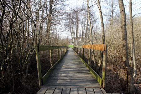 Wooden boardwalk between trees 版權商用圖片