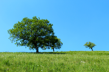 Isolated trees on a mountain slope against blue sky 版權商用圖片