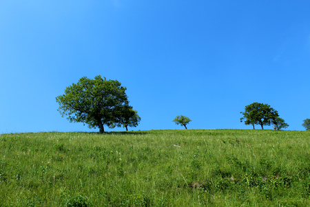 Isolated trees on a mountain slope against blue sky 版權商用圖片 - 96570595