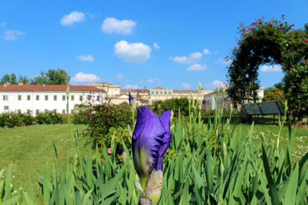Iris bud in a garden with a gazebo and a palace in the background Stok Fotoğraf