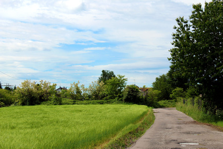Rural unpaved road and green wheat field Stock Photo