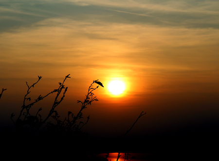 Tree branches and dry leaves in front of the sun during a sunset in autumn Stockfoto