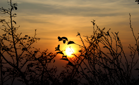 Silhouette of tree branches and leaves in autumn in front of the sun at sunset