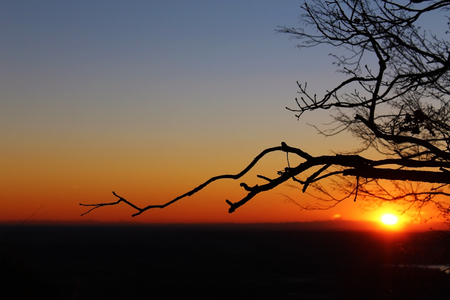 Bare tree branches and horizon in front of the Sun at dusk Stockfoto