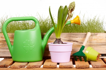 watering can, tools and flowers  photo
