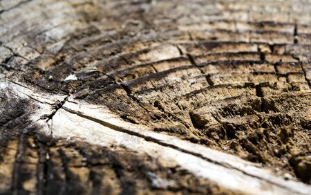 close-up on the rotting wood log Banque d'images