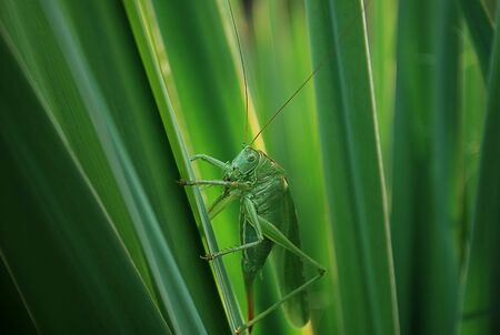 close-up to the grasshopper on green leaves