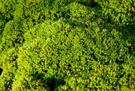 fresh green forest moss carpet Stock fotó