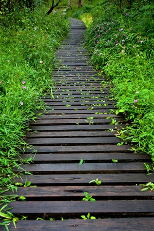 wooden boardwalk in forest  photo