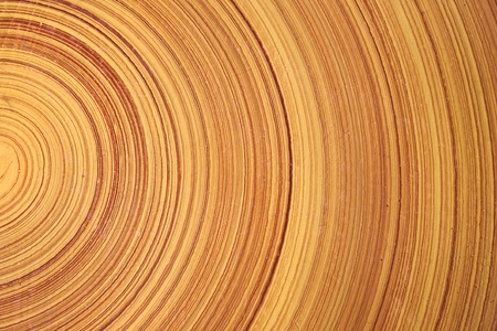 Abstract background like slice of log wood timber natural. Stock Photo - 9809345