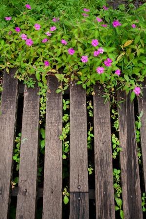 Bois planches promenade avec de belles fleurs roses