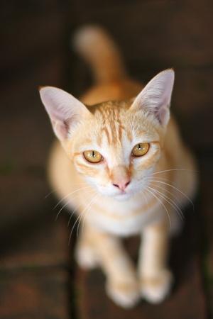 chat orange � la recherche Banque d'images
