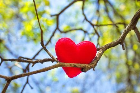 Coeur sur branche d'arbre avec des feuilles et fond de ciel Banque d'images