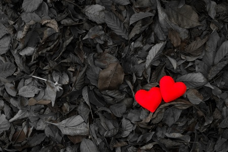 Two red hearts on dry leaves background Stock Photo