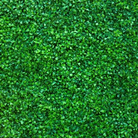 Fond vert feuille