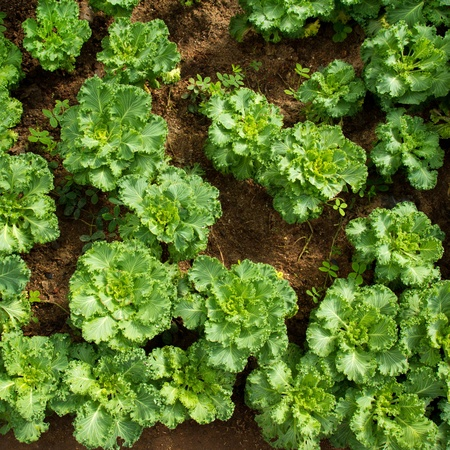 Vegetable Garden From Top View Stock Photo Picture And Royalty Free Image 12229306