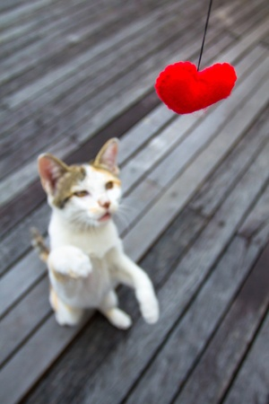 Cat Trying to catch the Love photo
